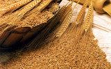 Информация об ограничении ввоза российской пшеницы в Турцию подтвердилась