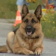 Французские специалисты научили собак определять онкологию