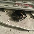 Появились новые данные о пострадавших от теракта в Петербурге