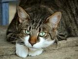 Душераздирающая история с толстым котом, которого не пускали в самолет, дошла до Думы