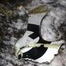 Судмедэкспертам РТ доставили 500 фрагментов тел жертв катастрофы