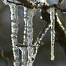 Весна в Москву придет к середине апреля, обещают синоптики