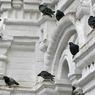 В больших стаях птицы летают быстрее, выяснили орнитологи