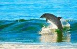 Дроздов прокомментировал сообщение о выбросившихся дельфинах в Новой Зеландии
