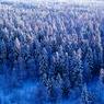 Лесной фестиваль должен повлиять на судьбу карельской тайги