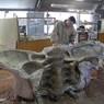 Ученые обнаружили останки супердинозавра