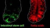 Ученые нашли способ избежать распространенного типа рака