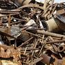 Три металла, потребление которых угрожает нашей памяти