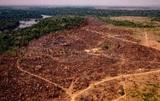 В Амазонии вырубка лесов бьет все рекорды