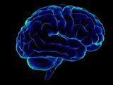 Ученые обнаружили участки мозга, отвечающие за совесть