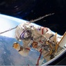 """""""Роскосмос"""" опроверг сообщения о нештатной ситуации при посадке экипажа МКС"""