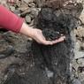 Геологи назвали новую причину одного из самых крупных массовых вымираний на Земле