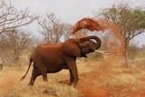 Взбешенный слон до смерти забил хоботом сотрудника японского зоопарка