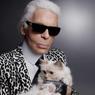 Котики-миллионеры получившие солидное  наследство