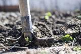 Депутат прокомментировала законопроект о «налоге на огород»
