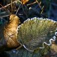 В Московском регионе зафиксированы первые заморозки