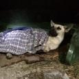 В Симферополе неравнодушные жители спасли пса