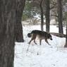 Бродячая собака нашла в лесу человеческую голову