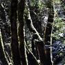 Подо льдами Северного полюса прячется тропический лес (ФОТО)