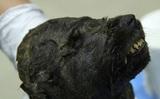 Археологи обнаружили в Якутии мумию щенка возрастом 18 000 лет