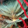 Жутковатый червяк возрастом в полмиллиарда лет помог разгадать тайну эволюции