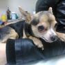 В Челябинске пёс вернулся к хозяйке спустя семь лет после пропажи