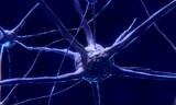 Ученые разрешили загадку способности мозга к познанию