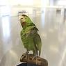 Целый список бюрократов вполне можно заменить ... попугаями (ВИДЕО)