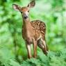 На грани: эксперты заявили о 60% сокращении популяций видов диких животных