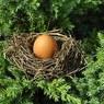 Яйцо в день уменьшает риск инсульта
