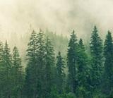 Заблудившуюся в лесу девочку нашли живой на четвёртые сутки