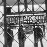 Германия: призрак Гитлера над «мигрантскими» нападениями