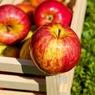 Яблоки, чай и умеренность - три ключевых ингредиента долголетия