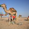 В ОАЭ  установилась  аномальная жара