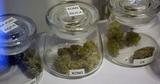 Бурятским наркоманам не дали выкурить 100 кг марихуаны