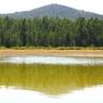 В Казахстане обнаружено озеро растительного масла