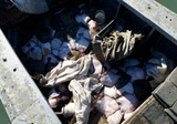 Россия освободила задержанных украинских рыбаков