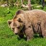 Очень необычная свадьба: московских молодоженов обручил медведь (ФОТО)