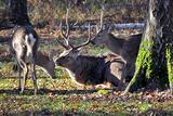 В Норвегии стихия погубила большое стадо оленей (ВИДЕО)