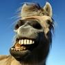 Лошадь станцевала мексиканский танец и стала звездой Сети ВИДЕО
