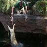 Крокодил съел человека прямо на глазах у туристов (ФОТО)
