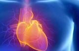 Названы три лучших витамина для здоровья сердца