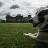 Собака Баскервилей в степях Якутии (ФОТО)