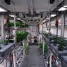 Учёные собрали первый урожай овощей, выращенных в Антарктиде