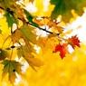 Синоптики пообещали возвращение тепла после ноябрьских праздников