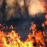 Площадь пожаров в Бурятии за выходные выросла вдвое