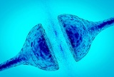 Ученые выяснили, как возникает сознание в мозге