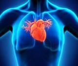 Кардиологи рассказали о трех самых полезных для сердца веществах
