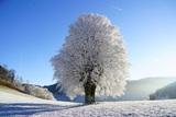 Морозы в Москве будут аномальными