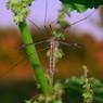 Билл Гейтс создаст генетически модифицированных комаров для борьбы с малярией